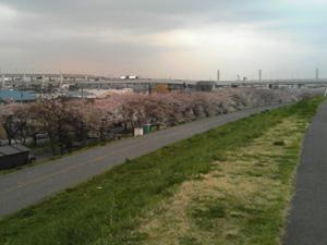 20070331sakura