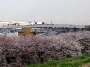 20080327sakura