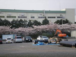 20090408sakura