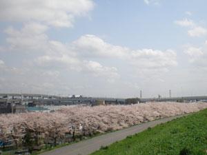20100410sakura1