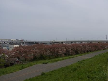 20150412sakura1